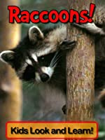 Raccoons! Learn About Raccoons and Enjoy Colorful Pictures - Look and Learn! (50+ Photos of Raccoons) (English Edition)
