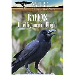 Nature: Ravens