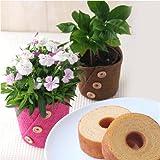 母の日・父の日 花鉢・お菓子セット ランキングお取り寄せ