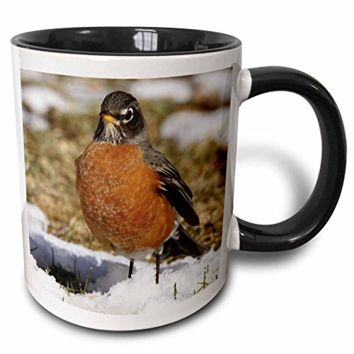 3dRose 3dRose American Robin Turdus migratorius Bird Photo Animal Photography - Two Tone Black Mug, 11oz (mug_116915_4), , Black/White