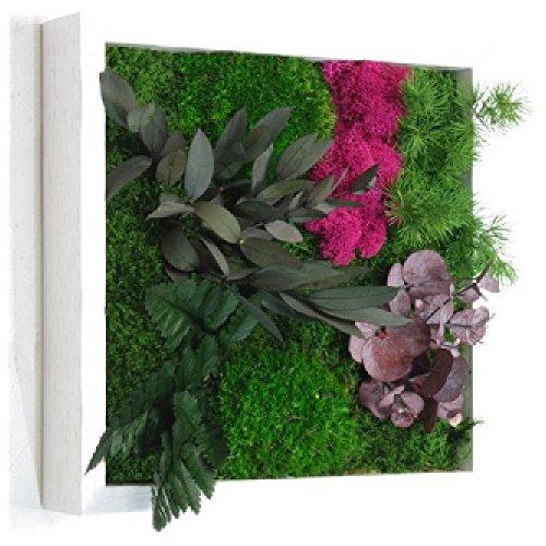 cadre-vegetal-nature-deco-22-x-22cm-ro-composes-de-plantes-naturelles-stabilisees-sans-aucun-entreti