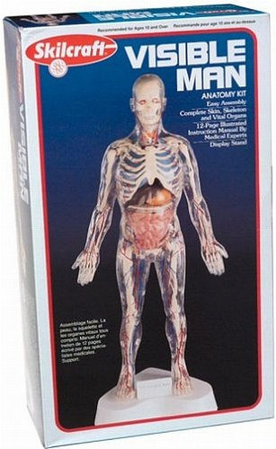 Visible Man Kit (The Human Body Model compare prices)