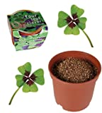Grow Your Own Lucky Four leaf clover - A Gardeners Novelty Gift - Ladies / Womans Perfect Ideal Christmas Present / Gift / Stocking Filler Ideal Gift for The Gardener