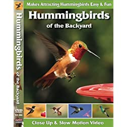 Hummingbirds of the Backyard