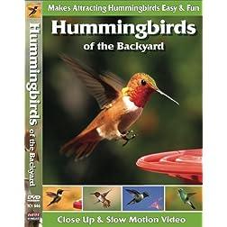Hummingbirds of the Backyard