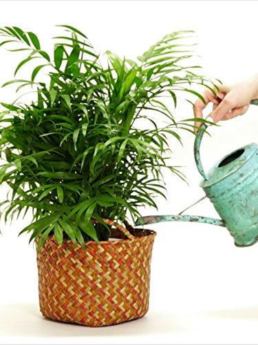 4 Plants That Clean Your Air