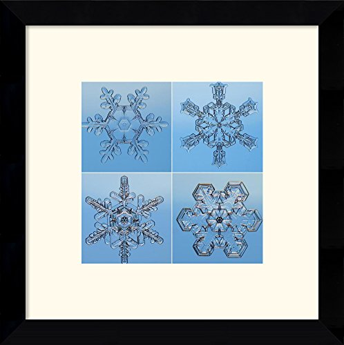 Snowflakes Seen Through Microscope By Steve Gettle Framed
