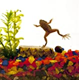 Natural Aquatics Frog Aquarium with 2 Frogs