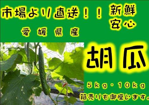 きゅうり 2kg【愛媛県・宮崎県産】【送料無料】