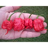 15 Carolina Reaper Pepper Seeds by Pepper Gardeners