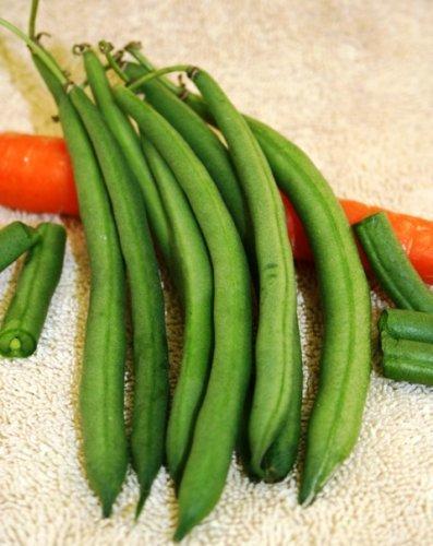 Kentucky Wonder Organic Beans