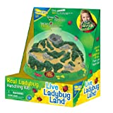 : Insect Lore Ladybug Land