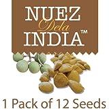 Nuez de la India - 12 Semillas