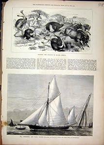 Impresión Antigua de la Nave 1877 del Partido de la Yola del Goleta de la África del Norte de la Avestruz