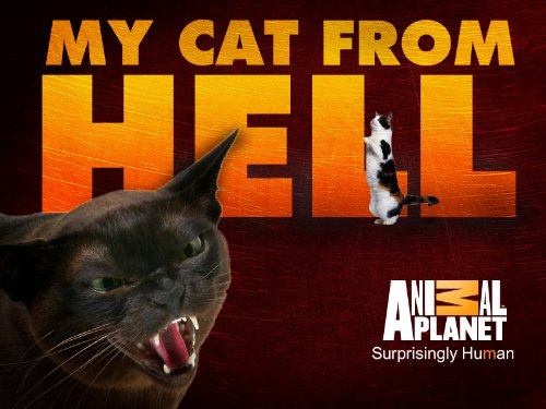 My cat from hell season 1 episode 1 he for Jackson cat whisperer