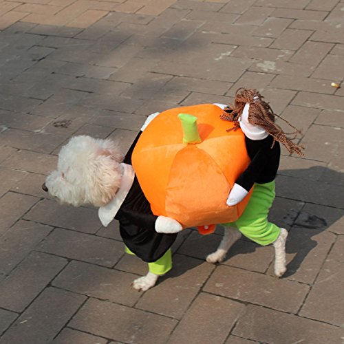 ZILucky Halloween Puppy Pet Dog Cat Clothes Carrying Pumpkin Costume Apparel Jacket (XS(Back Length (Pumpkin Outfit For Dogs)