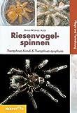 Riesenvogelspinnen: Theraphosa blondi & Theraphosa apophysis. Pflege und Vermehrung