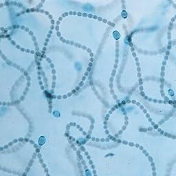 General Microbiology Microscope Slide Set
