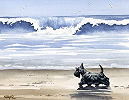 ''Scottish Terrier At the Beach'' Dog Art Print Signed By Artist DJ Rogers