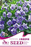 Amazon / Hankuke: Small flower pansy Seeds of 300,Hankuke Biennial Series Farm, Ranch, Patio, Lawn Garden Vegetables Herbs Flowers Plants Germination Seeds - Small flower pansy