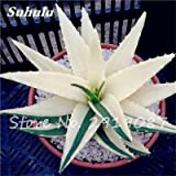 New! 20 Pcs Colorful Cactus Rebutia Variety Mix Exotic Aloe Seed Cacti Rare Cactus Office Edible Beauty Succulent Bonsai Plant 19 (Color: 19, Tamaño: Show In Picture)