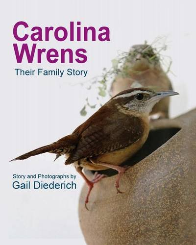 Carolina Wrens: Their Family Story