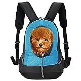 Pet Carrier, Itery Back Front Pack Dog Cat Travel Bag Pet Mesh Backpack Head out Design Padded Adjustable Shoulder Strap