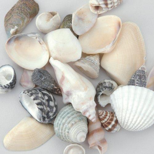 Pin Small Sea Shell Crafts on Pinterest