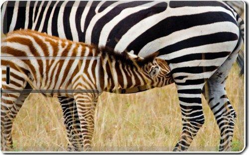 Animal Zebra Wildlife Calf Feeding Pattern Baby Africa Grassland Black White 4G Usb Flash Drive 2.0 Memory Stick Luxlady Usb Credit Card Size Customized Support Services Ready Windows Mac Storage External front-279003