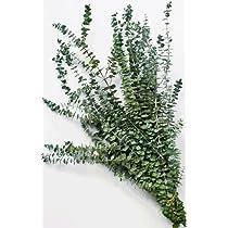 Eucalyptus Branches - Kiwi Green