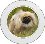 Tax Disc Holder ft. The Pekingese