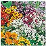 Mélange de fleurs protectrices du jardin 2 grammes (+/- 600 graines)