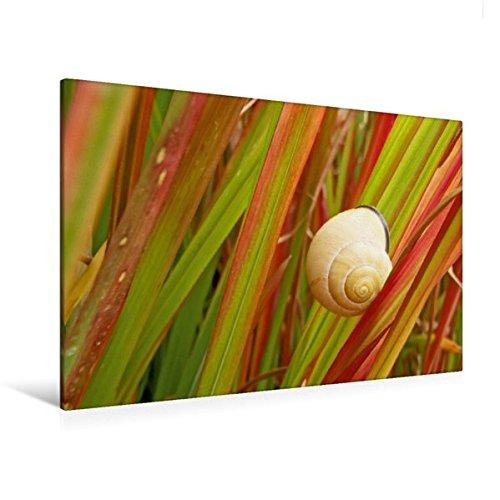 premium-textil-leinwand-120-cm-x-80-cm-quer-rote-rutenhirse-wandbild-bild-auf-keilrahmen-fertigbild-