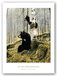 In The Adirondacks by Michael Coleman 16&quot;x20&quot; Art Print Poster