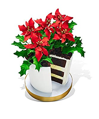 Poinsettia Flower Pot Cake by Made in Heaven Cakes