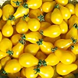 Yellow Pear Cherry Tomato Seeds by National Gardens
