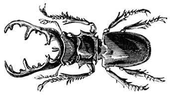 Amazon.com: The Texas Longhorn Beetle Incident (Adventures