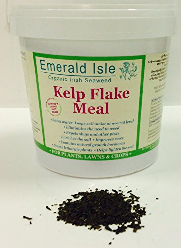 farina-di-alghe-marine-kelp-fertilizzante-per-giardino-fiori-prati-e-aiuole-1-kg-organic-certificati