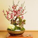 迎春:松竹梅(信楽焼鉢・亀付)*
