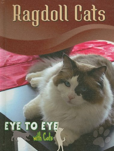 Ragdoll Cats (Eye to Eye With Cats)