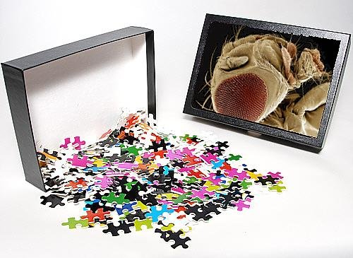 Photo Jigsaw Puzzle Of Lrds-57 Fruit Fly From Ardea Wildlife Pets