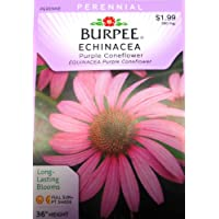 Burpee Flower Echinacea Purple Coneflower 38158D (Purple) 100 Seeds