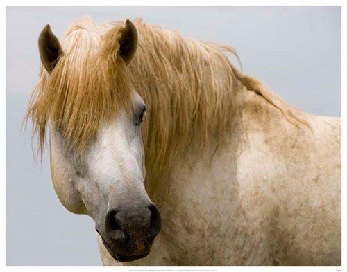 Animal Print Horse Stallion Poster