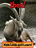 Ibex! Learn About Ibex and Enjoy Colorful Pictures - Look and Learn! (50+ Photos of Ibex)
