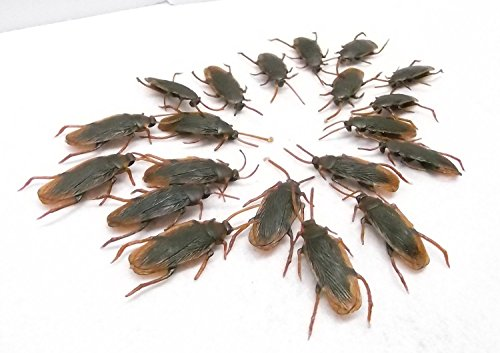 Toward German cockroach is required to pest hell jokes goods mass of 20 animals set Bireji Hild fake cockroach, sideshow joint party and welcome party, Halloween, party, and other events! Surprised, shockingly radical, imitation, toy, gluttony, Madagascar Day, Mother's Day, gift, interesting goods