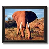 Elephant Large Tusk Close Up African Animal Wildlife Wall Picture Black Framed Art Print