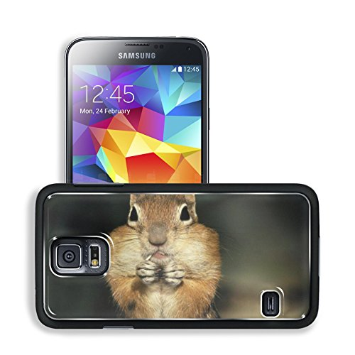 Brown Squirrel Stuffed Checked Nuts Samsung Galaxy S5 Sm-G900 Snap Cover Premium Aluminium Design Back Plate Case Open Ports Customized Made To Order Support Ready 5 8/16 Inch (140Mm) X 3 2/16 Inch (80Mm) X 11/16 Inch (17Mm) Msd S5 Professional Cases Acce front-1074392