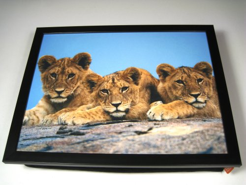 Lion Cubs Cute Baby Animal Africa