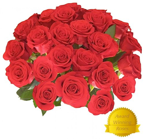 Flowers For Delivery - Impress Her With 25 Giant, Red (Or Choose Color) Incredibly Fragrant Long Stem Roses, Top Rated Roses On Amazon From Spring In The Air Luxury Roses, Plus A Free Gift Message - Will Wow Your Recipient!