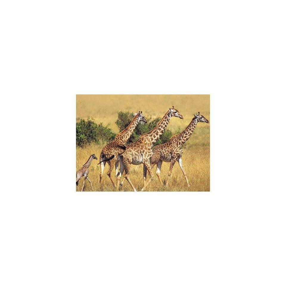 Animal Planet Giraffes 200 pc on PopScreen